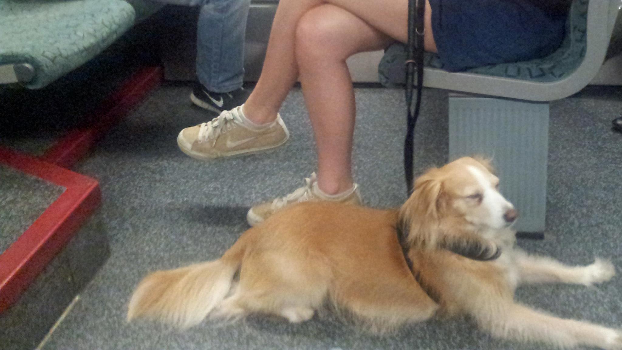 Dog-Train-Berlin